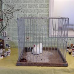 Kip en eieren les